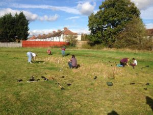 Field of conservation workers on sunny day